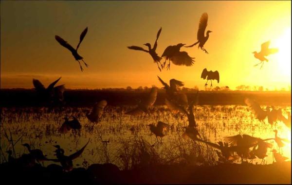 birds at Yolo Bypass Wildlife Area
